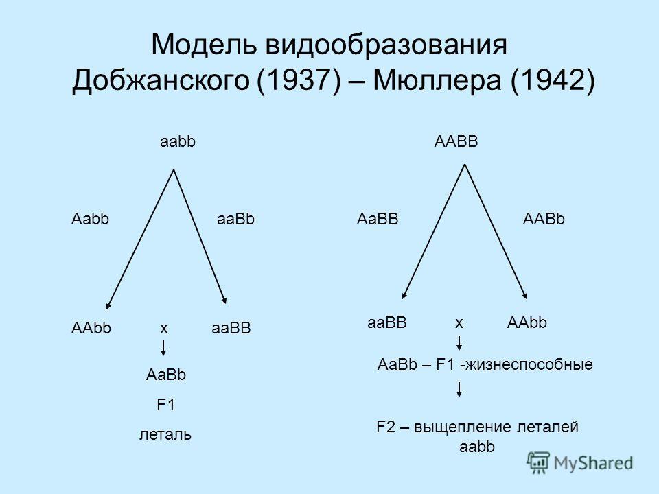 Примеры гибридной летальности у растений 1.На стадии проростков в F1 (Crepis capillaris x C. tectorum, Hollingshead, 1930). 2.На стадии развития зародыша и проростков (Gossipium arboreum x G. hirsutum, Gerstel,1954; Lee, 1981). 3.На стадии проростков