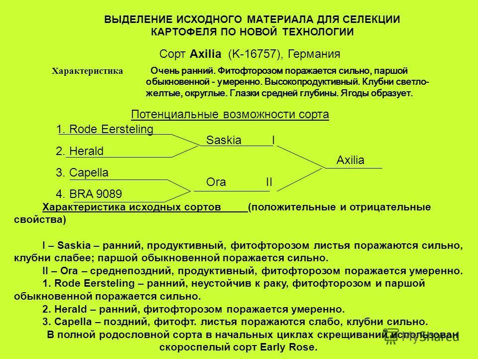 ВЫДЕЛЕНИЕ ИСХОДНОГО МАТЕРИАЛА ДЛЯ СЕЛЕКЦИИ КАРТОФЕЛЯ ПО НОВОЙ ТЕХНОЛОГИИ Сорт Axilia (K-16757), Германия Характеристика Очень ранний. Фитофторозом поражается сильно, паршой обыкновенной - умеренно. Высокопродуктивный. Клубни светло- желтые, округлые.