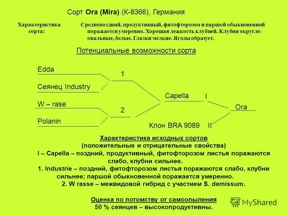 Сорт Ora (Mira) (К-8366), Германия Характеристика сорта: Среднепоздний, продуктивный, фитофторозом и паршой обыкновенной поражается умеренно. Хорошая лежкость клубней. Клубни округло- овальные, белые. Глазки мелкие. Ягоды образует. Потенциальные возм