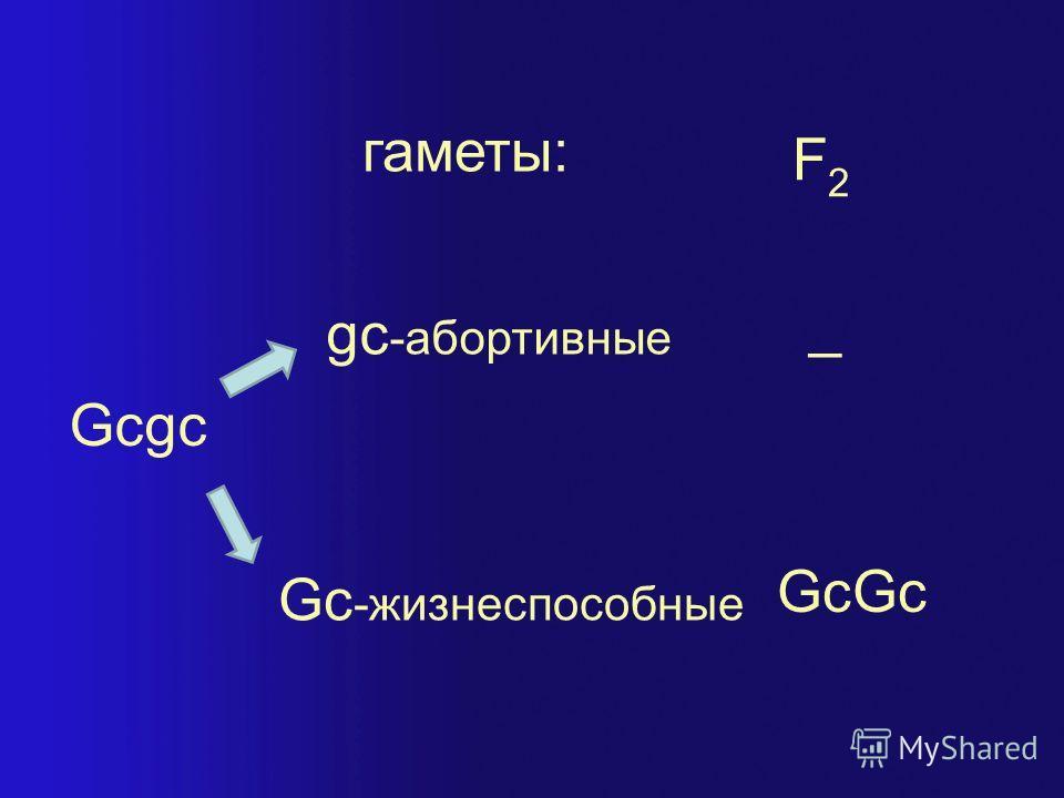 gc -абортивные Gc -жизнеспособные Gcgc гаметы: GcGc _ F2F2