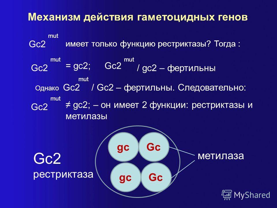 Механизм действия гаметоцидных генов gc Gc2 mut имеет только функцию рестриктазы? Тогда : Gc2 mut = gc2;Gc2 mut / gc2 – фертильны Однако Gc2 mut / Gc2 – фертильны. Следовательно: Gc2 mut gc2; – он имеет 2 функции: рестриктазы и метилазы Gc gcGc Gc2 р