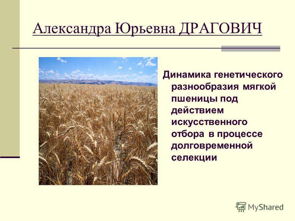 Александра Юрьевна ДРАГОВИЧ Динамика генетического разнообразия мягкой пшеницы под действием искусственного отбора в процессе долговременной селекции