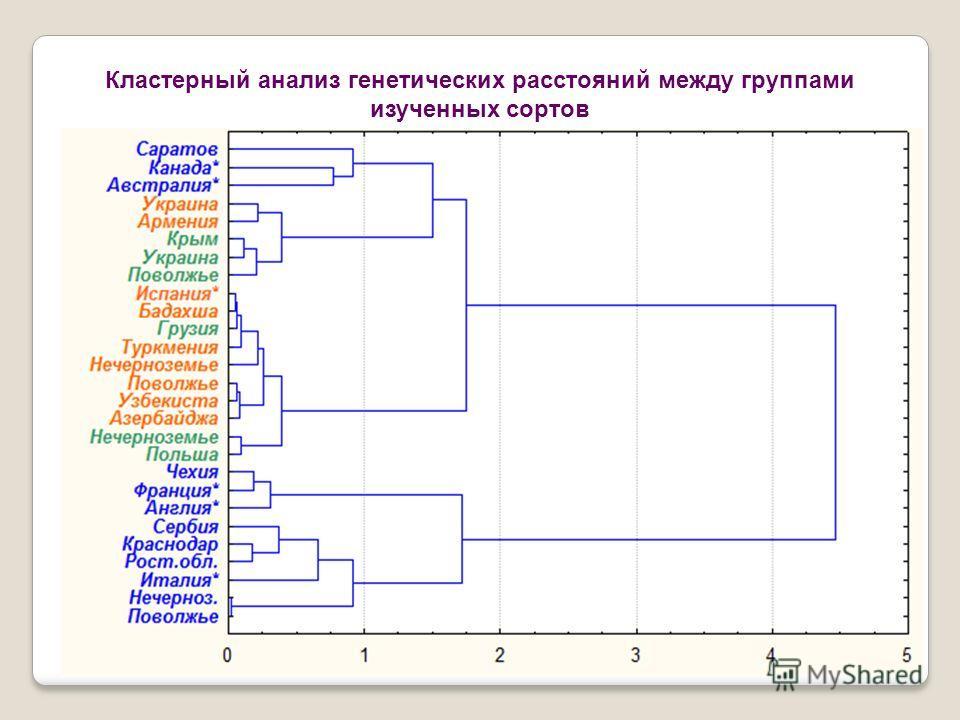 Кластерный анализ генетических расстояний между группами изученных сортов