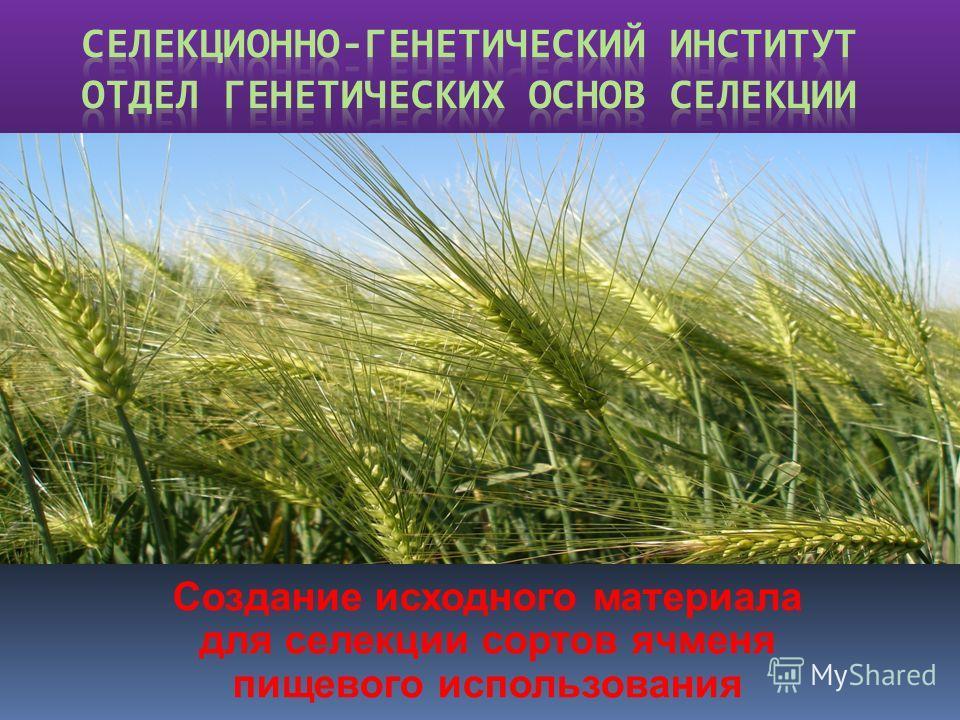 Создание исходного материала для селекции сортов ячменя пищевого использования