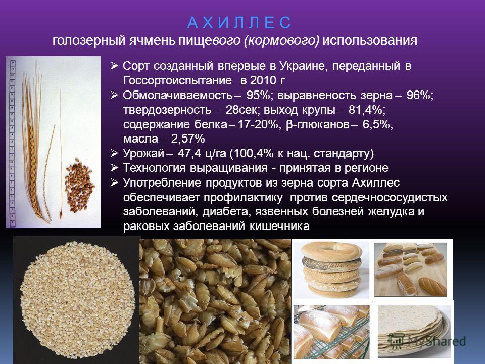 А Х И Л Л Е С голозерный ячмень пищевого (кормового) использования Сорт созданный впервые в Украине, переданный в Госсортоиспытание в 2010 г Обмолачиваемость ̶ 95%; выравненость зерна ̶ 96%; твердозерность ̶ 28сек; выход крупы ̶ 81,4%; содержание бел