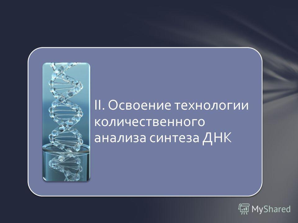 II. Освоение технологии количественного анализа синтеза ДНК