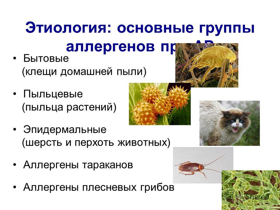Этиология: основные группы аллергенов при АР Бытовые (клещи домашней пыли) Пыльцевые (пыльца растений) Эпидермальные (шерсть и перхоть животных) Аллергены тараканов Аллергены плесневых грибов