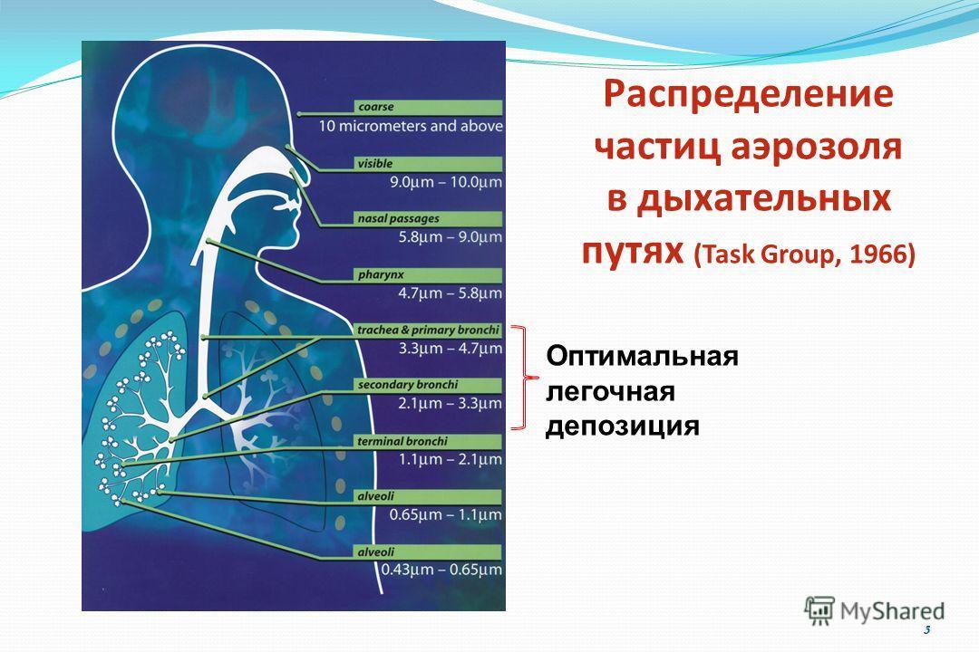 3 Оптимальная легочная депозиция Распределение частиц аэрозоля в дыхательных путях (Task Group, 1966)