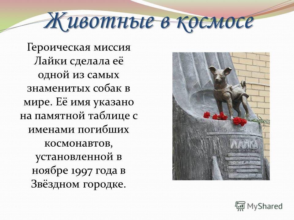 Животные в космосе Героическая миссия Лайки сделала её одной из самых знаменитых собак в мире. Её имя указано на памятной таблице с именами погибших космонавтов, установленной в ноябре 1997 года в Звёздном городке.