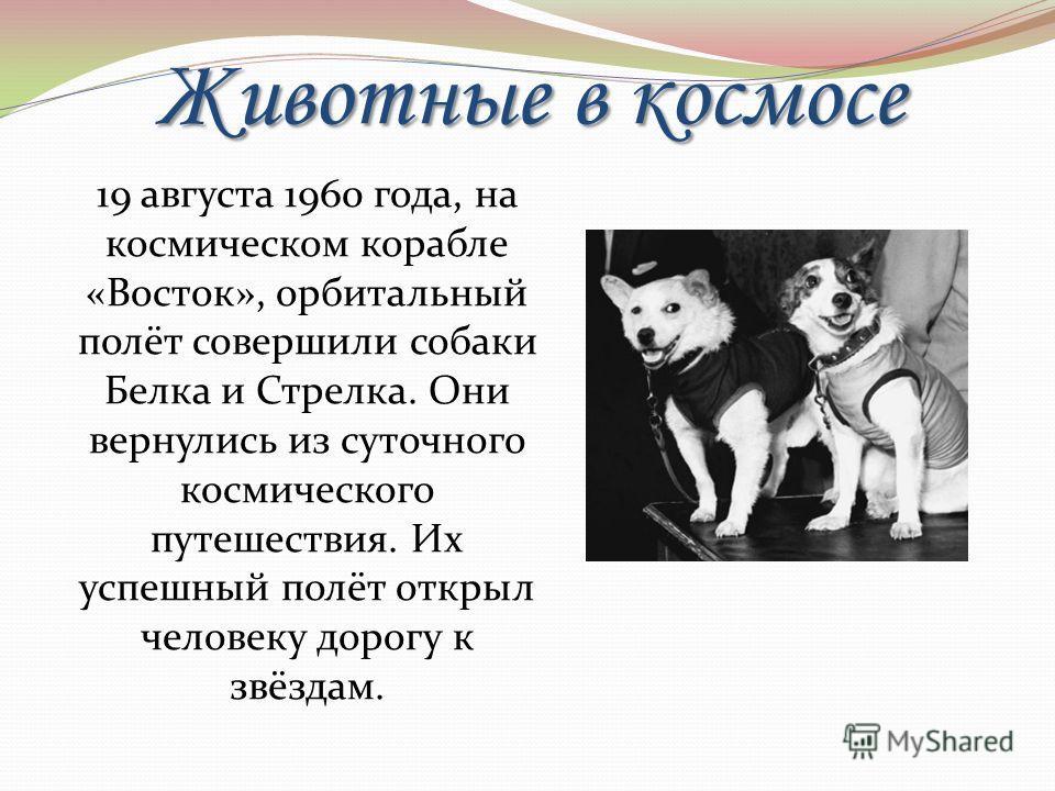 Животные в космосе 19 августа 1960 года, на космическом корабле «Восток», орбитальный полёт совершили собаки Белка и Стрелка. Они вернулись из суточного космического путешествия. Их успешный полёт открыл человеку дорогу к звёздам.