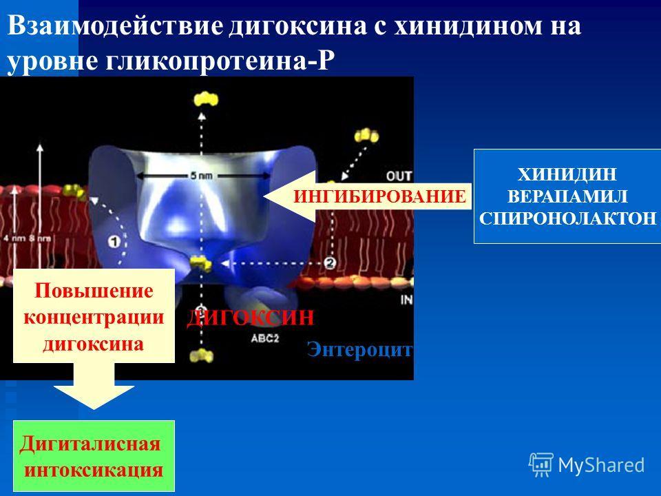 ХИНИДИН ВЕРАПАМИЛ СПИРОНОЛАКТОН Дигиталисная интоксикация Повышение концентрации дигоксина ИНГИБИРОВАНИЕ Энтероцит ДИГОКСИН Взаимодействие дигоксина с хинидином на уровне гликопротеина-Р
