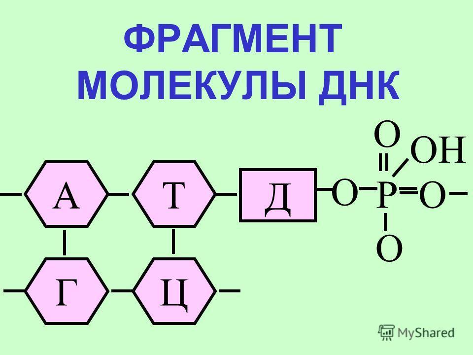 СТРОЕНИЕ НУКЛЕОТИДА ДНК OH АД OPO