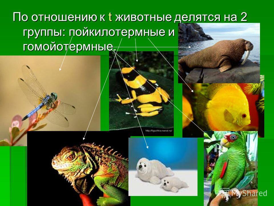 По отношению к t животные делятся на 2 группы: пойкилотермные и гомойотермные.