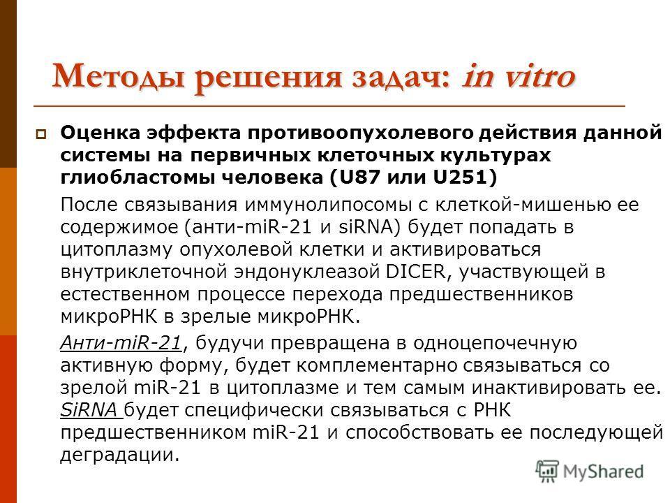 Оценка эффекта противоопухолевого действия данной системы на первичных клеточных культурах глиобластомы человека (U87 или U251) После связывания иммунолипосомы с клеткой-мишенью ее содержимое (анти-miR-21 и siRNA) будет попадать в цитоплазму опухолев