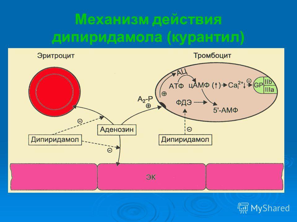 Механизм действия дипиридамола (курантил)