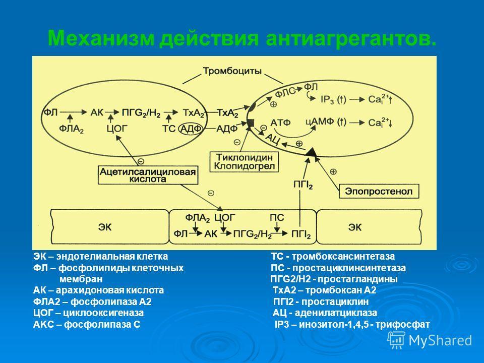 Механизм действия антиагрегантов. ЭК – эндотелиальная клетка ТС - тромбоксансинтетаза ФЛ – фосфолипиды клеточных ПС - простациклинсинтетаза мембран ПГG2/H2 - простагландины АК – арахидоновая кислота ТхА2 – тромбоксан А2 ФЛА2 – фосфолипаза А2 ПГI2 - п