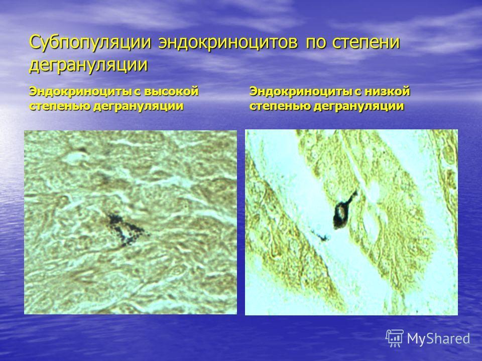Субпопуляции эндокриноцитов по степени дегрануляции Эндокриноциты с высокой степенью дегрануляции Эндокриноциты с низкой степенью дегрануляции