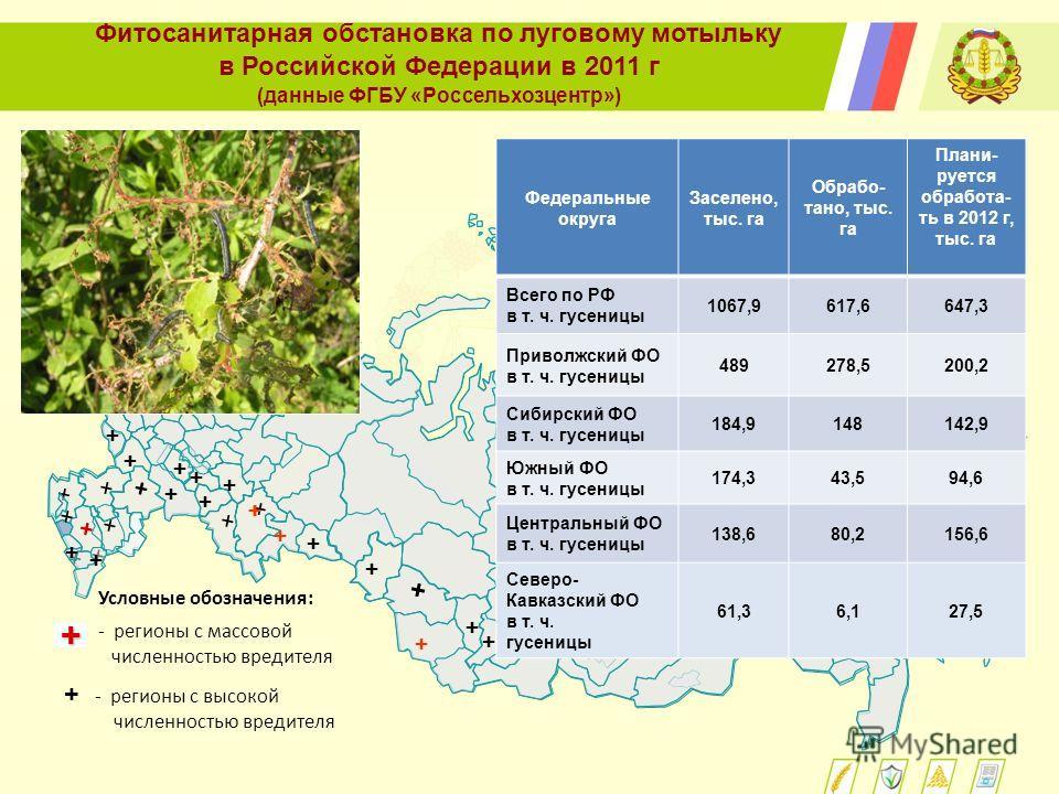 Фитосанитарная обстановка по луговому мотыльку в Российской Федерации в 2011 г (данные ФГБУ «Россельхозцентр») Условные обозначения: + - регионы с массовой численностью вредителя + - регионы с высокой численностью вредителя + + + + + + + + + + + + +
