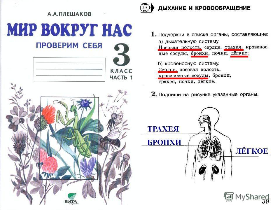ТРАХЕЯ БРОНХИ ЛЁГКОЕ