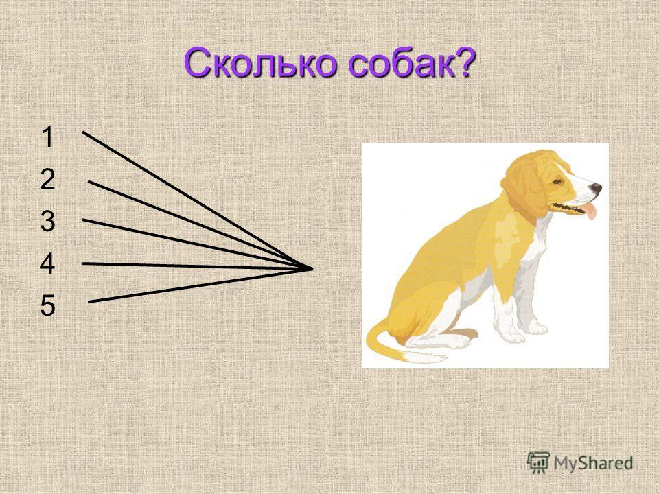 Сколько собак? 1 2 3 4 5