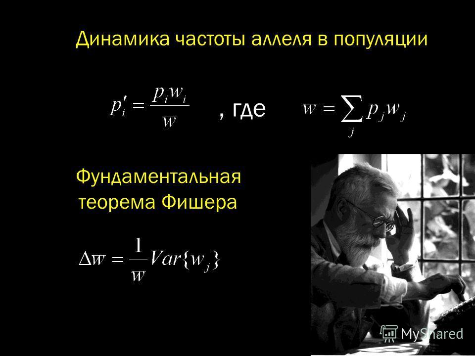 Фундаментальная теорема Фишера Динамика частоты аллеля в популяции, где