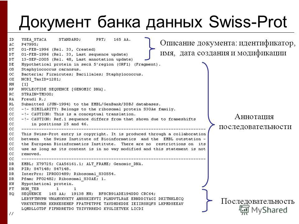 Документ банка данных Swiss-Prot Описание документа: идентификатор, имя, дата создания и модификации Аннотация последовательности Последовательность