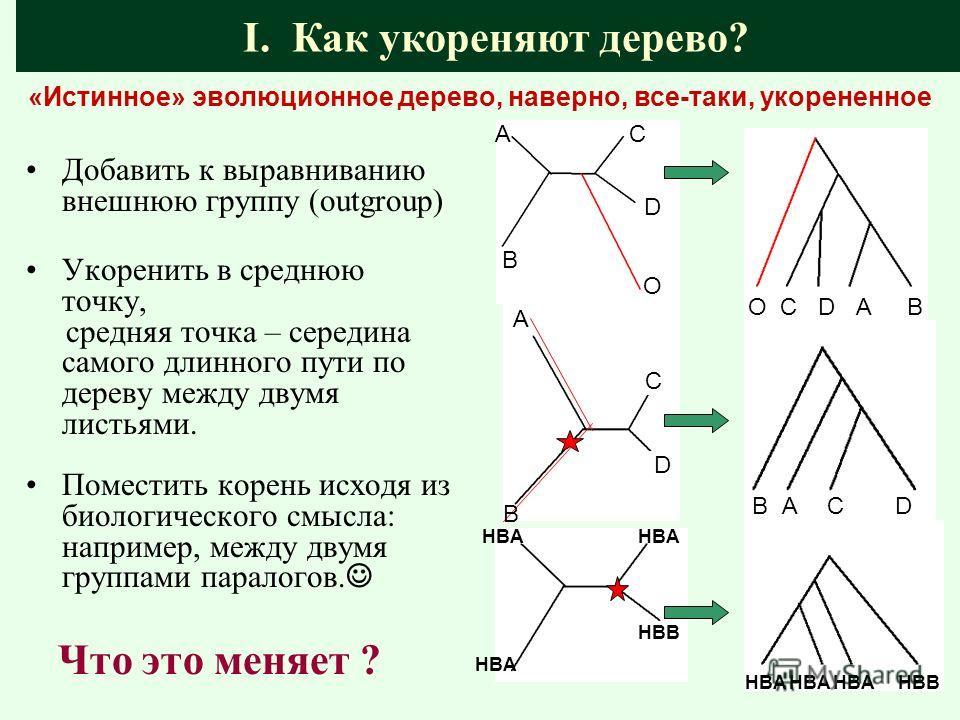 D C A B HBA HBВ Добавить к выравниванию внешнюю группу (outgroup) Укоренить в среднюю точку, средняя точка – середина самого длинного пути по дереву между двумя листьями. Поместить корень исходя из биологического смысла: например, между двумя группам