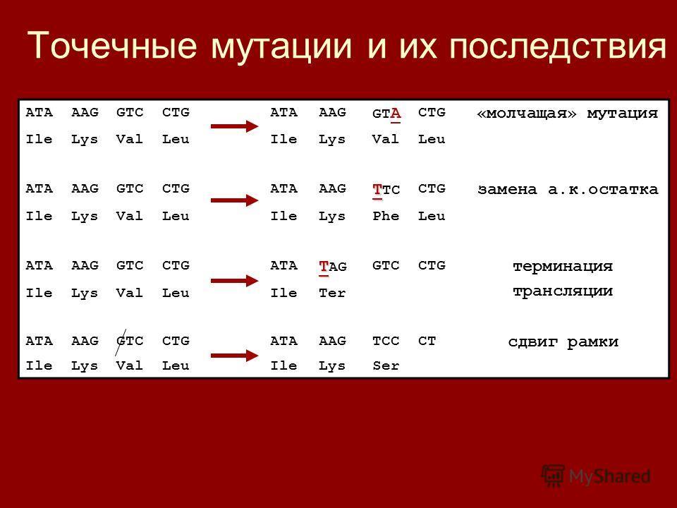 Точечные мутации и их последствия ATAAAGGTCCTGATAAAG GT A CTG «молчащая» мутация IleLysValLeuIleLysValLeu ATAAAGGTCCTGATAAAG T T TC CTG замена а.к.остатка IleLysValLeuIleLysPheLeu ATAAAGGTCCTGATA T T AG GTCCTG терминация трансляции IleLysValLeuIleTer