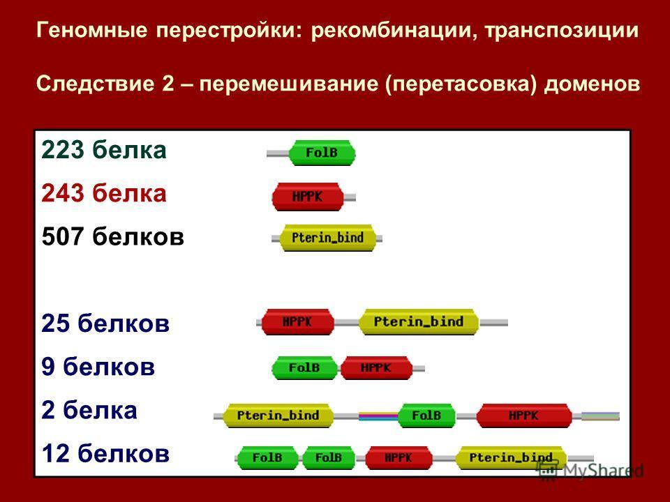 Геномные перестройки: рекомбинации, транспозиции Следствие 2 – перемешивание (перетасовка) доменов 223 белка 243 белка 507 белков 25 белков 9 белков 2 белка 12 белков