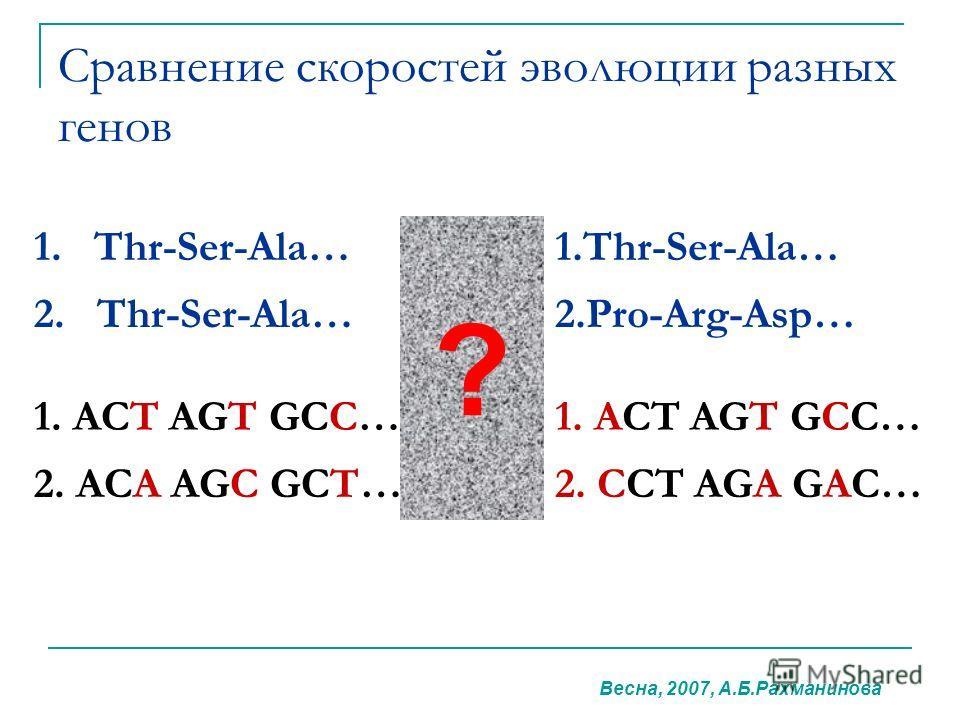 Сравнение скоростей эволюции разных генов 1. Thr-Ser-Ala… 2. Thr-Ser-Ala…2.Pro-Arg-Asp… 1. ACT AGT GCC… 2. ACA AGC GCT…2. CCT AGA GAC… ? Весна, 2007, А.Б.Рахманинова