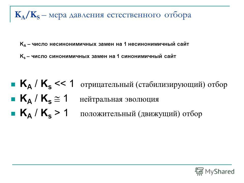 K A /K S – мера давления естественного отбора K A – число несинонимичных замен на 1 несинонимичный сайт K s – число синонимичных замен на 1 синонимичный сайт K A / K s  1 положительный (движущий) отбор