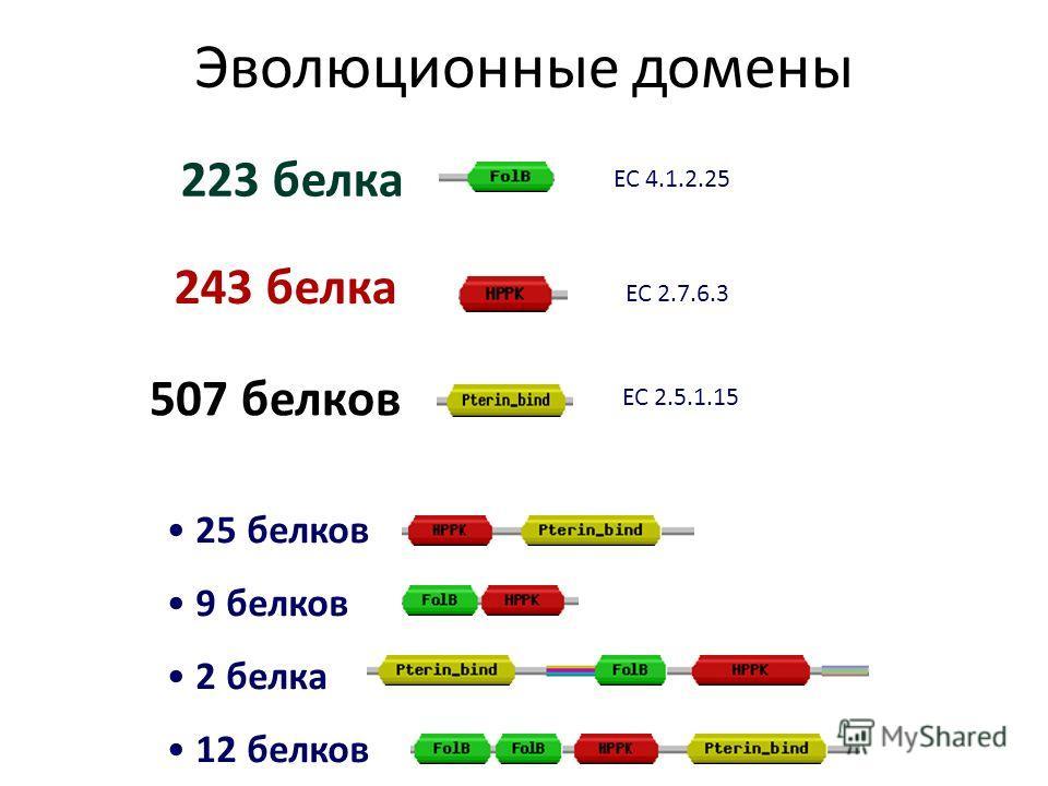 Эволюционные домены 25 белков 9 белков 2 белка 12 белков 223 белка 243 белка 507 белков ЕС 2.5.1.15 ЕС 4.1.2.25 ЕС 2.7.6.3