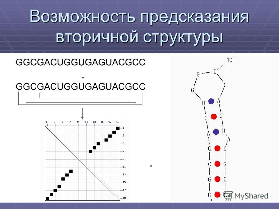 Возможность предсказания вторичной структуры GGCGACUGGUGAGUACGCC