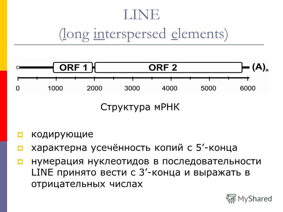 LINE (long interspersed elements) Структура мРНК кодирующие характерна усечённость копий с 5-конца нумерация нуклеотидов в последовательности LINE принято вести с 3-конца и выражать в отрицательных числах