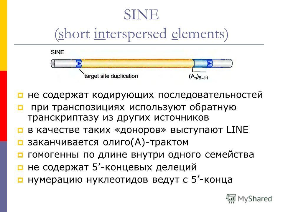 SINE (short interspersed elements) не содержат кодирующих последовательностей при транспозициях используют обратную транскриптазу из других источников в качестве таких «доноров» выступают LINE заканчивается олиго(А)-трактом гомогенны по длине внутри