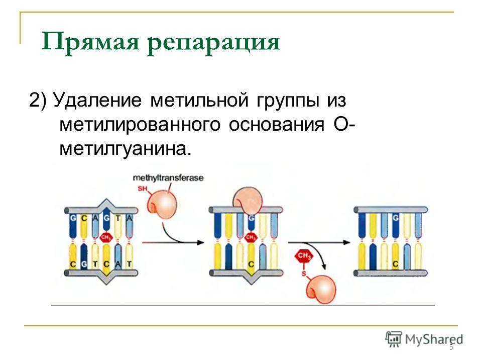 Прямая репарация 2) Удаление метильной группы из метилированного основания О- метилгуанина. 5