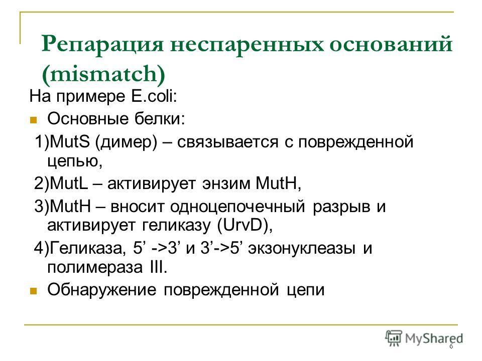 Репарация неспаренных оснований (mismatch) На примере E.coli: Основные белки: 1)MutS (димер) – связывается с поврежденной цепью, 2)MutL – активирует энзим MutH, 3)MutH – вносит одноцепочечный разрыв и активирует геликазу (UrvD), 4)Геликаза, 5 ->3 и 3