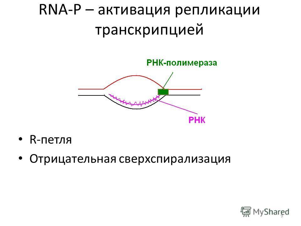 RNA-P – активация репликации транскрипцией R-петля Отрицательная сверхспирализация 9