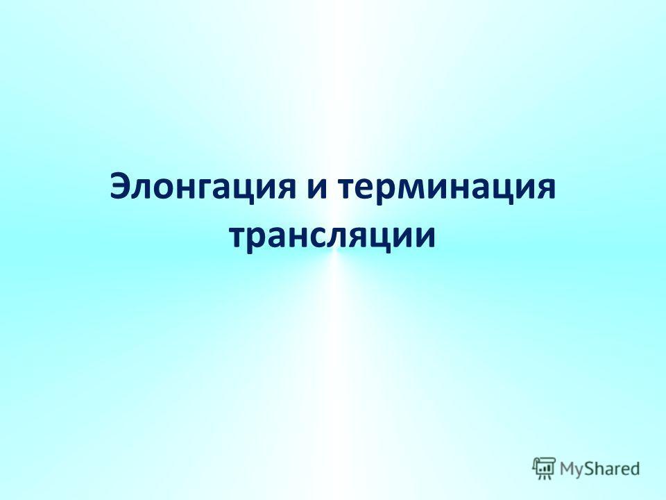 Элонгация и терминация трансляции