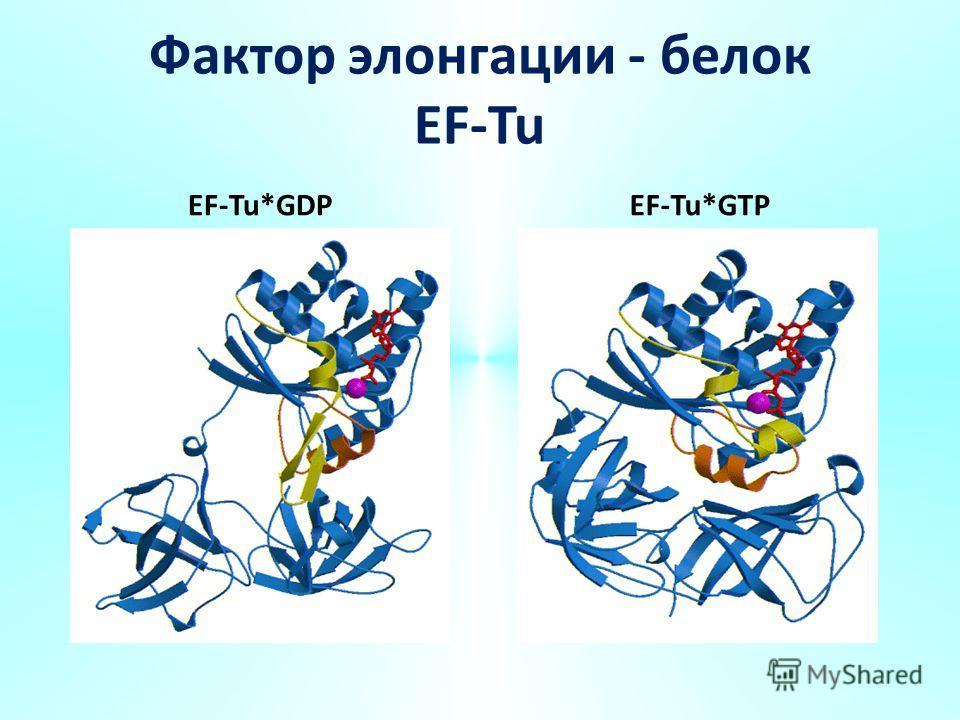 Фактор элонгации - белок EF-Tu EF-Tu*GDPEF-Tu*GTP