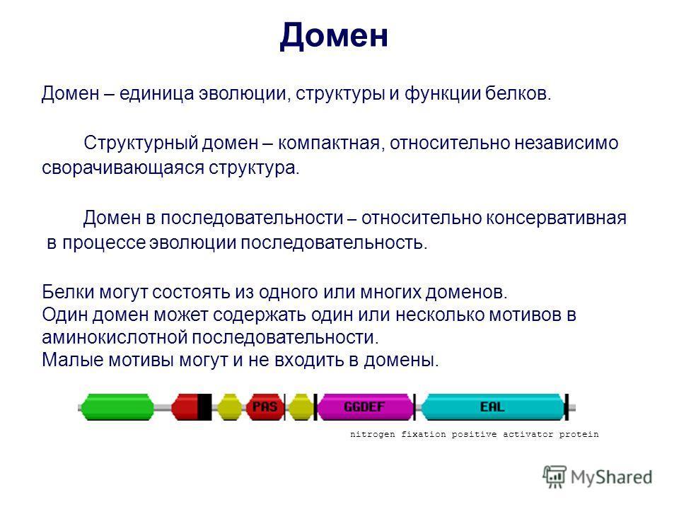 Домен – единица эволюции, структуры и функции белков. Структурный домен – компактная, относительно независимо сворачивающаяся структура. Домен в последовательности – относительно консервативная в процессе эволюции последовательность. Белки могут сост