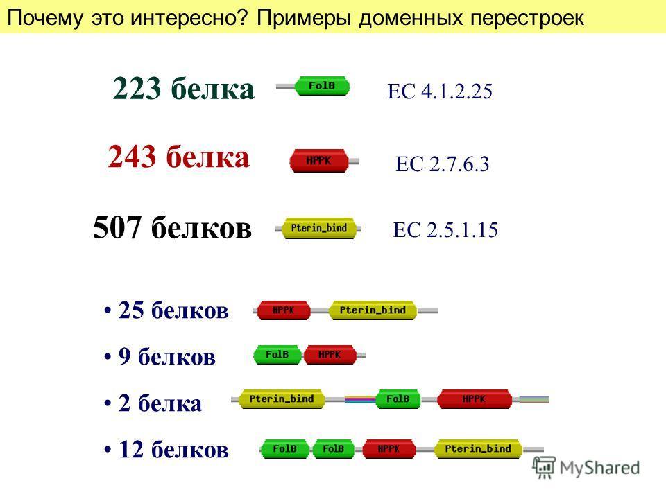 25 белков 9 белков 2 белка 12 белков 223 белка 243 белка 507 белков ЕС 2.5.1.15 ЕС 4.1.2.25 ЕС 2.7.6.3 Почему это интересно? Примеры доменных перестроек