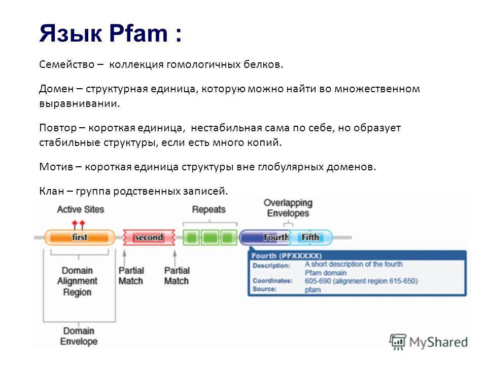 Язык Pfam : Семейство – коллекция гомологичных белков. Домен – структурная единица, которую можно найти во множественном выравнивании. Повтор – короткая единица, нестабильная сама по себе, но образует стабильные структуры, если есть много копий. Моти