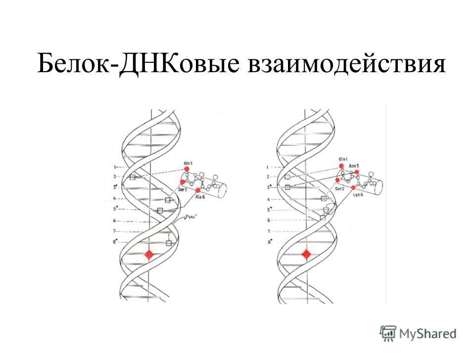 Белок-ДНКовые взаимодействия