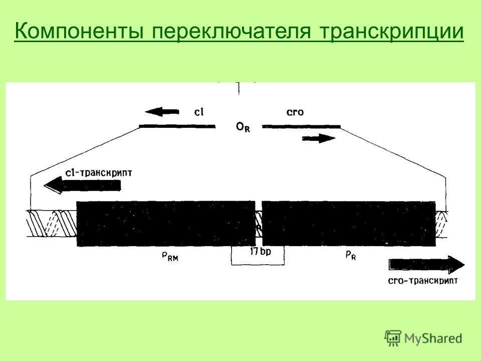 Компоненты переключателя транскрипции