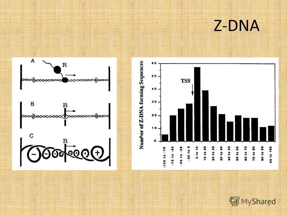 Z-DNA 9