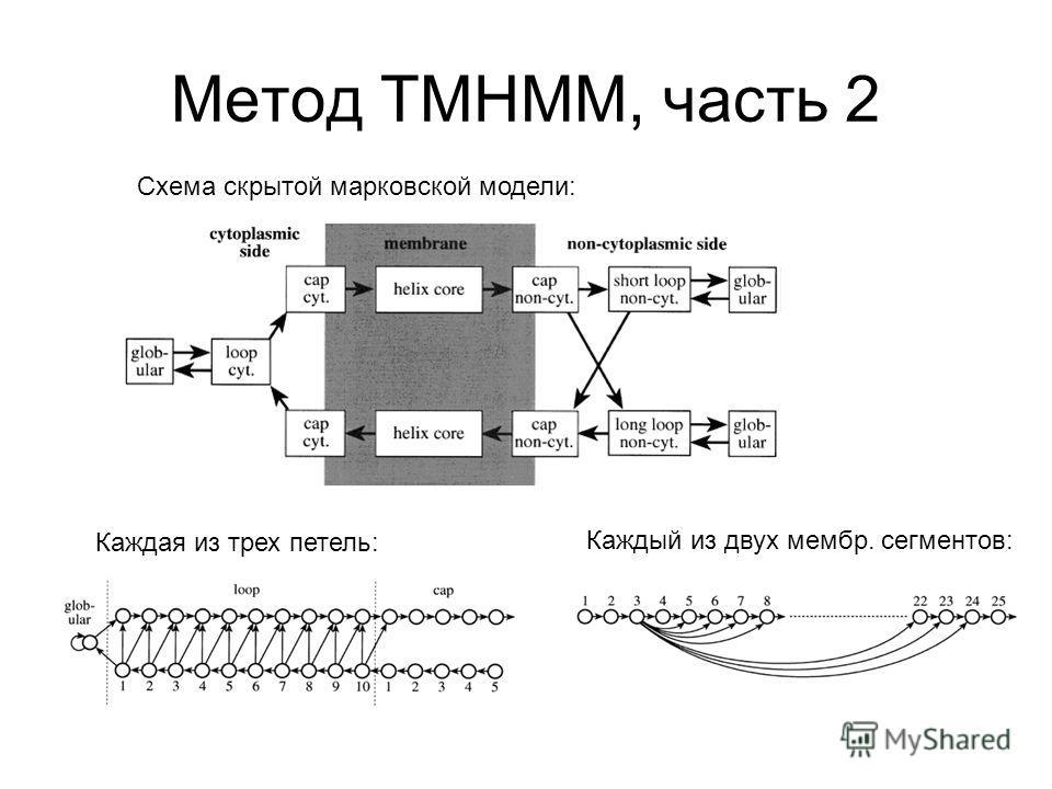 Метод TMHMM, часть 2 Схема скрытой марковской модели: Каждая из трех петель: Каждый из двух мембр. сегментов: