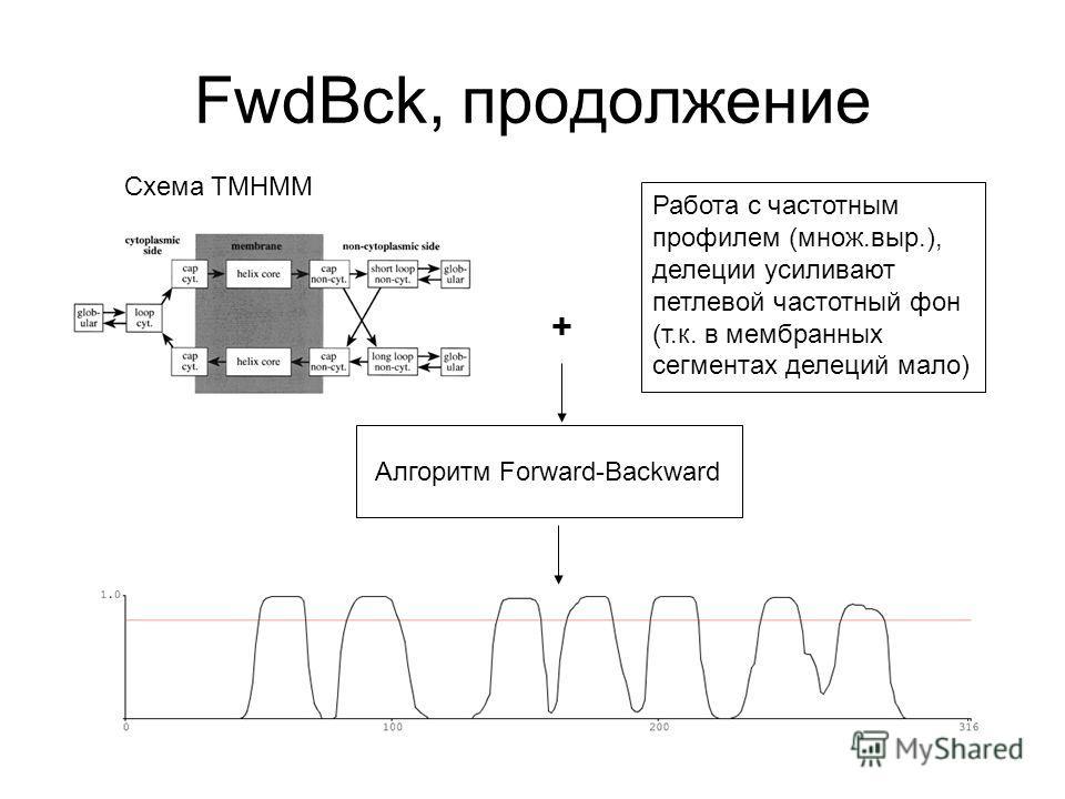 FwdBck, продолжение Схема TMHMM + Работа с частотным профилем (множ.выр.), делеции усиливают петлевой частотный фон (т.к. в мембранных сегментах делеций мало) Алгоритм Forward-Backward