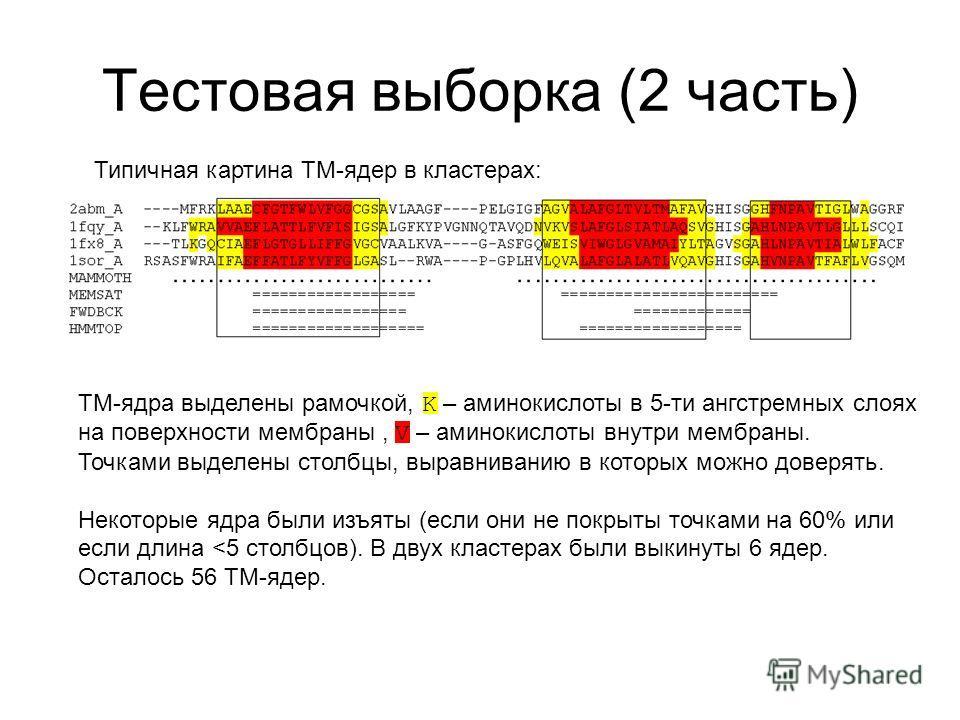 Тестовая выборка (2 часть) Типичная картина TM-ядер в кластерах: TM-ядра выделены рамочкой, K – аминокислоты в 5-ти ангстремных слоях на поверхности мембраны, V – аминокислоты внутри мембраны. Точками выделены столбцы, выравниванию в которых можно до