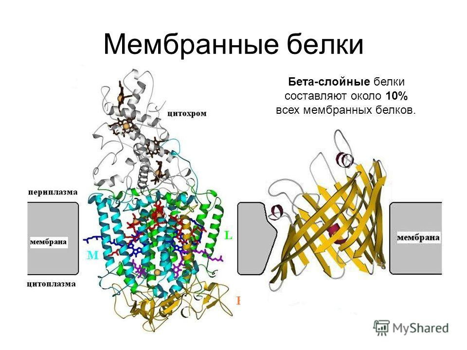 Мембранные белки Бета-слойные белки составляют около 10% всех мембранных белков.